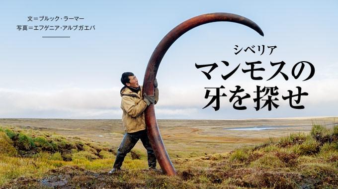 かつて人類の胃袋を満たしたマンモス。シベリアでは現在、その牙が高値で取引され、地域の経済を潤している。