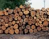 忍法、木遁の術