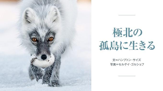 雪と氷に閉ざされたロシアのウランゲリ島は、人間を簡単には寄せつけない野生動物たちの聖域だ。