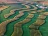 米国ウィスコンシン州の農場。トウモロコシと大豆の間にアルファルファを植えて、化学肥料の流出を防ぐ