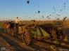 堆肥とわらをまくアーミッシュの農夫