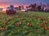 鶏の糞を肥料に使う農場(米国ペンシルベニア州)