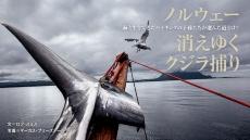 ノルウェー 消えゆくクジラ捕り