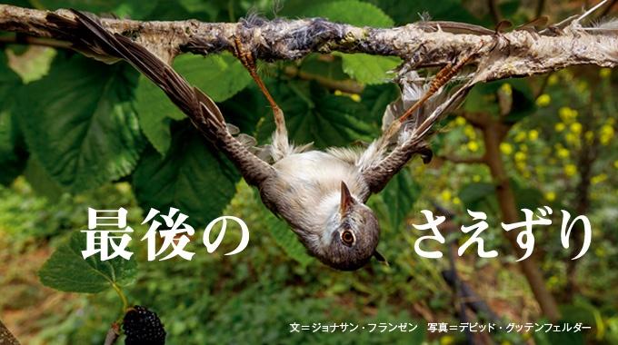 季節ごとに大移動する渡り鳥たちが、地中海沿岸で大量に捕獲され、殺されている。