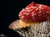 米国では12月15日はカップケーキの日