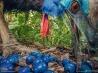 好物の青い果実を食べるヒクイドリ
