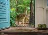 玄関先を通り過ぎる2羽のヒクイドリ