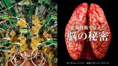 先端技術で見えた脳の秘密