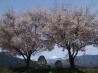 安曇野の春(長野県 安曇野 堀金)