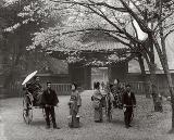 春の静けさ、増上寺の桜の下で