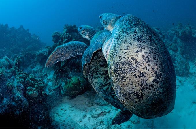 モザンビーク海峡 二つの環礁の物語