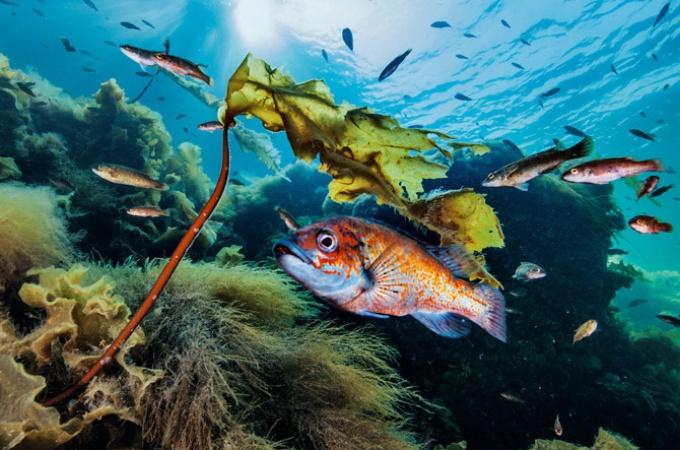 セントローレンス湾 豊かな海の恵み