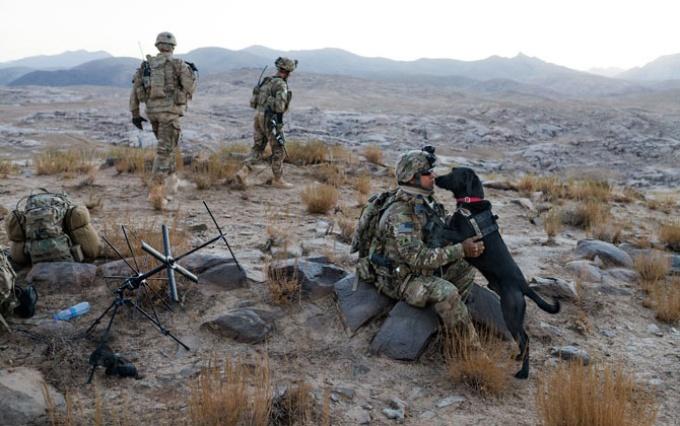 戦場で兵士を守る犬たち