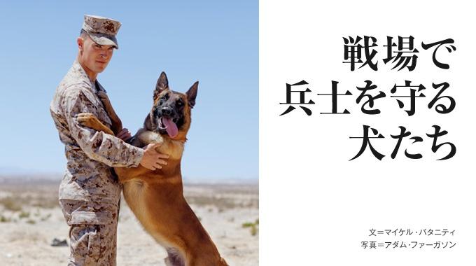 米軍が駐留するアフガニスタンの戦闘地域では、厳しい訓練を積んだ軍用犬が活動中だ。ある軍用犬と兵士の運命をたどる。