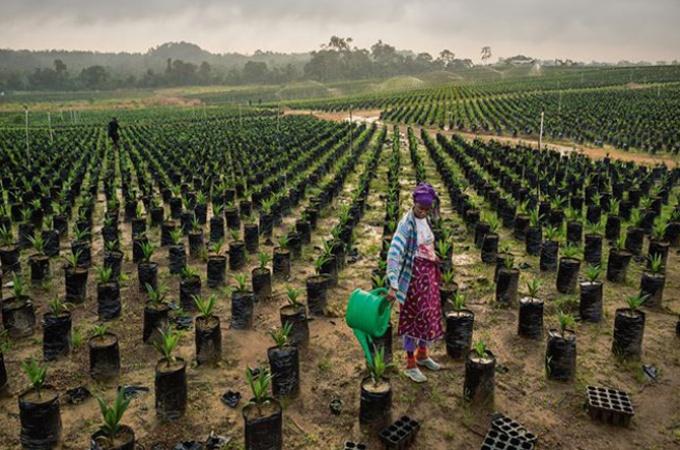 シリーズ 90億人の食 アフリカの農業開発