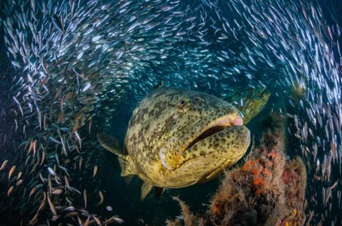 フロリダ沖のでっかい魚