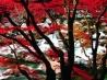 秋探し(福島県 いわき市 夏井川渓谷)