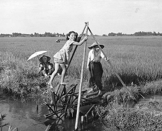 夏の田んぼで働く少女