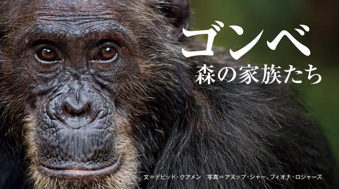 今年80歳を迎えた霊長類学者のジェーン・グドール。タンザニアのフィールドで出会った、忘れがたいチンパンジーたちとの思い出を語る。