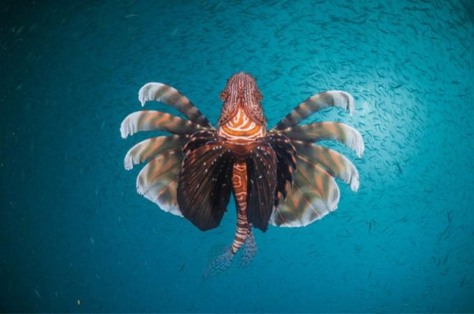 アフリカ南部の海 保護と漁のはざまで