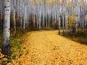 アスペンの森、コロラド州