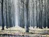 セルビアの森