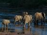 ゾウの列、南アフリカ共和国