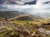 山の草花、イタリア