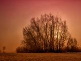霧の中の木、ドイツ