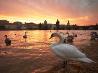 プラハの白鳥