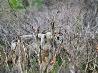 オオカミ、デナリ国立公園