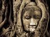 仏頭と菩提樹、タイ