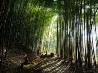 竹林、日本