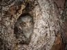 ヒガシアメリカオオコノハズク、アメリカ
