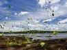 チョウの群れ、イグアス川