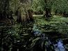 ビッグサイプレス国立野生保護区