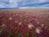 ツンドラの秋、ロシア