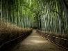 日本の竹林