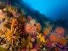 イソギンチャクと軟質サンゴ