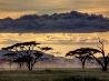 セレンゲティ、タンザニア