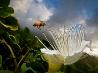 カウアイ島のミツバチ