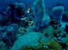サンゴ礁を散策するダイバー、ドミニカ島