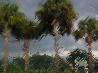 フロリダの雷雨