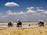 ゾウ、ナミビア