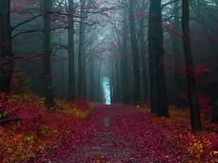 秋の森、ドイツ