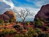 一本の木、アーチーズ国立公園