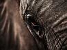 ゾウ、南アフリカ