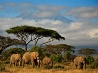 ゾウ、ケニア