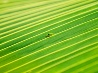 ヤモリとヤシの葉
