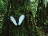 羽を休める蝶、ボリビア